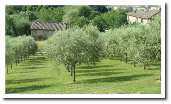 Garden and Olive-Grove